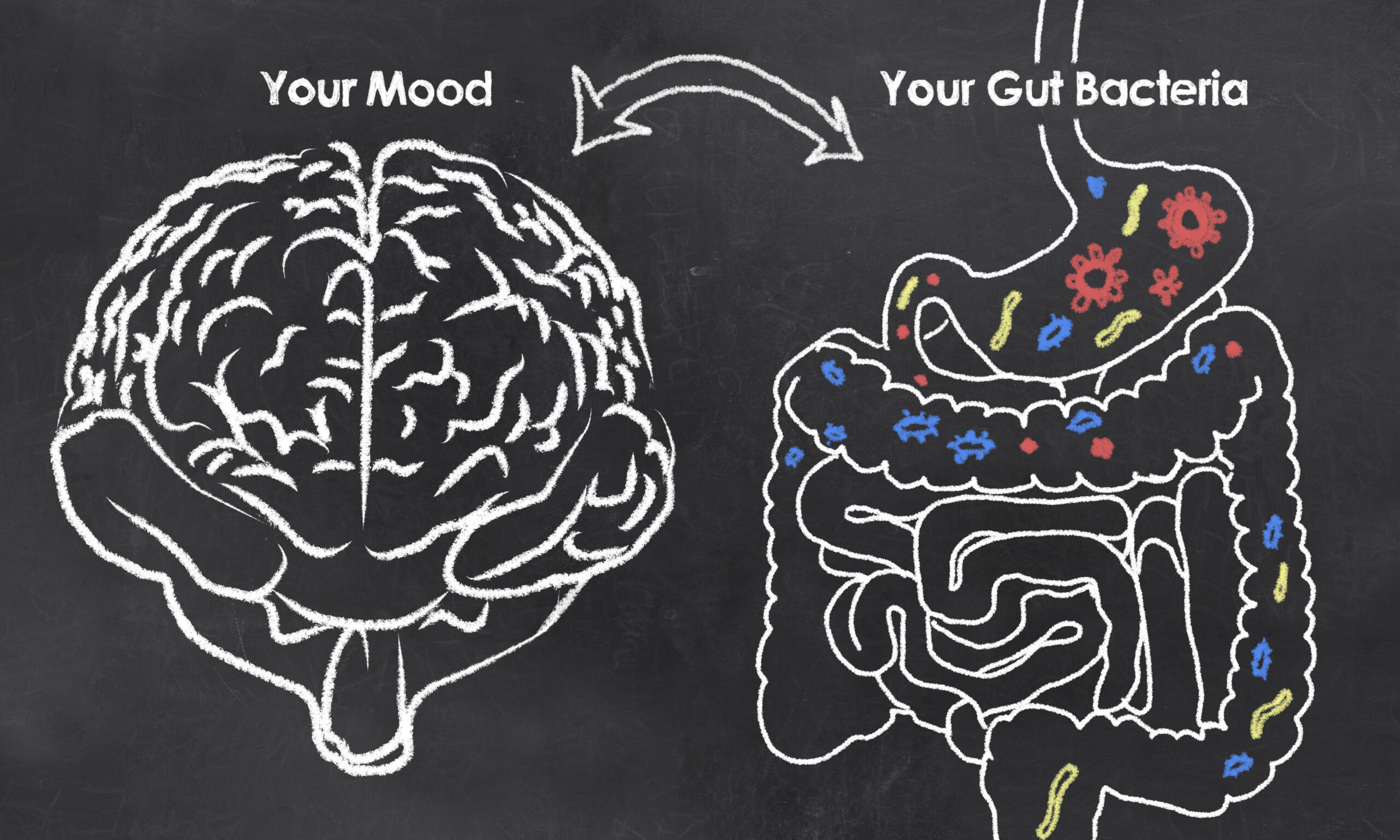 The brain and gut connection.