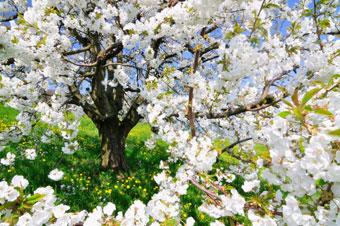 fruittree_big