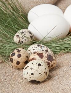 BTUS 6-Quail Eggs